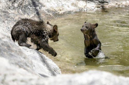 Tarsus Doğa Parkı'nda hayvanlar nasıl serinliyor?