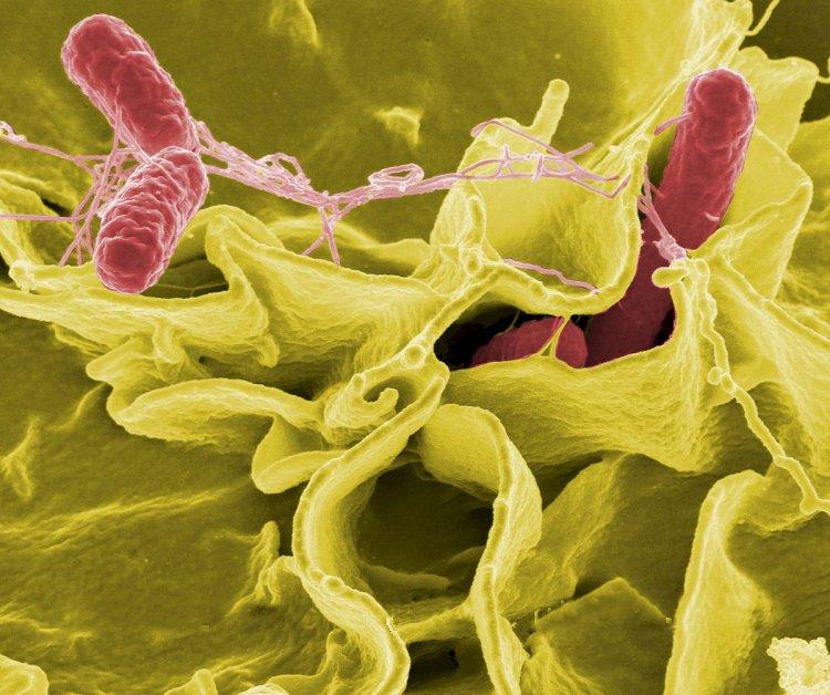 Kırmızı soğandan bulaşıyor: Şimdi de başımıza bu çıktı: Salmonella salgını paniği