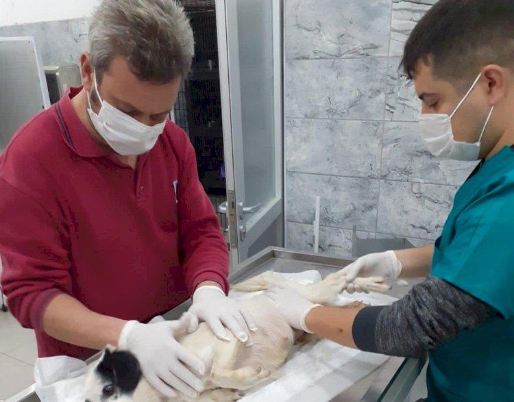 Erdek'te ezilen köpeği BBB tedavi ediyor