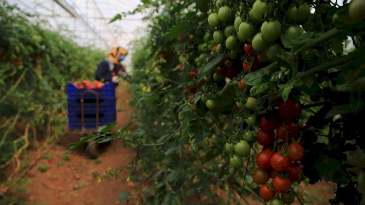 Üretici için bir sonraki hasat dönemi zora girebilir