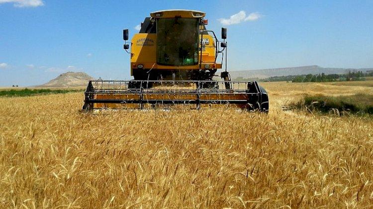 Ukrayna erken tahıl hasadında tüm yılların rekorunu kırdı